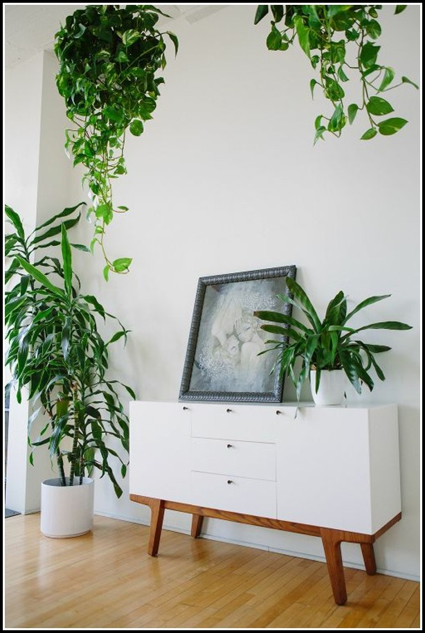 Feng Shui Wohnzimmer Pflanzen