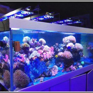 aquarium led beleuchtung selber bauen meerwasser beleuchthung house und dekor galerie