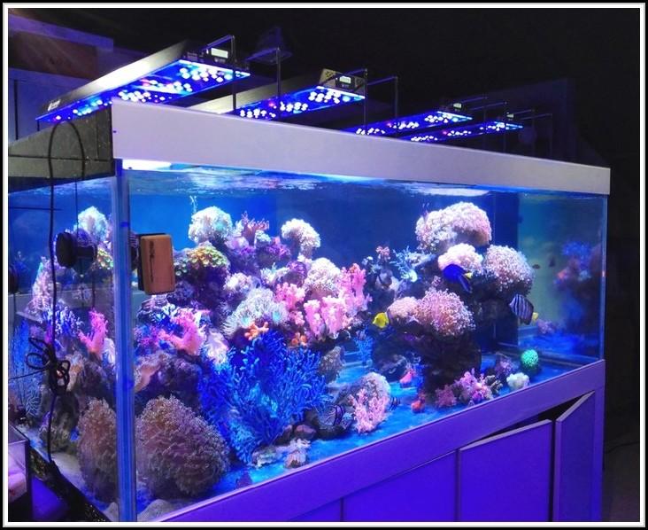 aquarium led beleuchtung selber bauen 2014 beleuchthung house und dekor galerie a3k95a2k5e. Black Bedroom Furniture Sets. Home Design Ideas