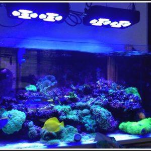 Aquarium Led Beleuchtung Selber Machen