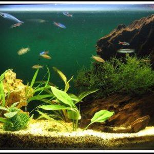 Aquarium Mit Led Beleuchtung Kaufen