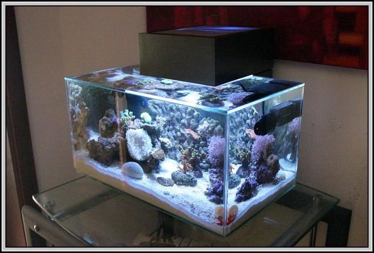 Beleuchtung Nano Meerwasser Aquarium