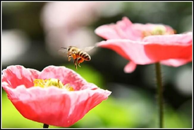 Bienenhaltung Im Garten