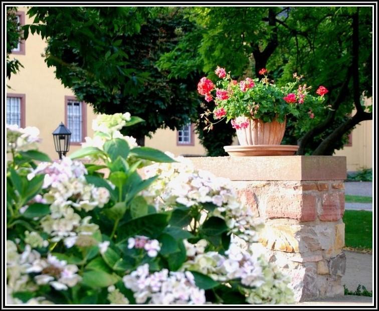 Blumen im garten so 20 arten garten house und dekor for Dekor im garten
