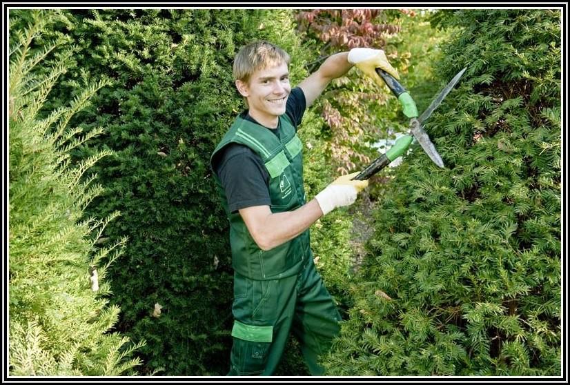 Bewerbung Garten Und Landschaftsbau Ausbildung