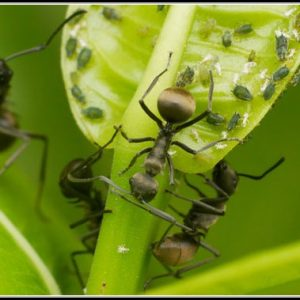 Hausmittel Gegen Ameisen Im Garten