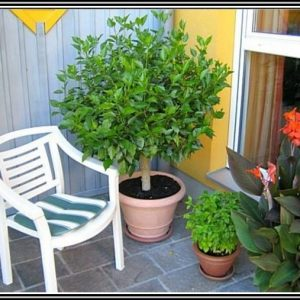 Hibiskus Standort Garten