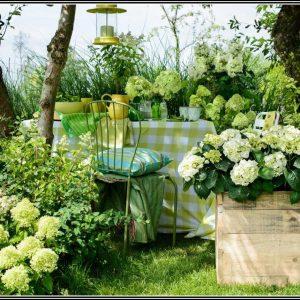 Hortensien Im Garten Pflanzen