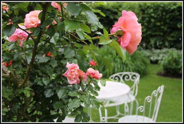 Rosen Im Garten Bilder