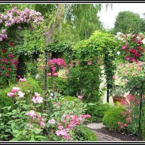Rosen Im Garten Umsetzen