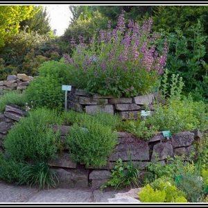 Rosmarin Im Garten