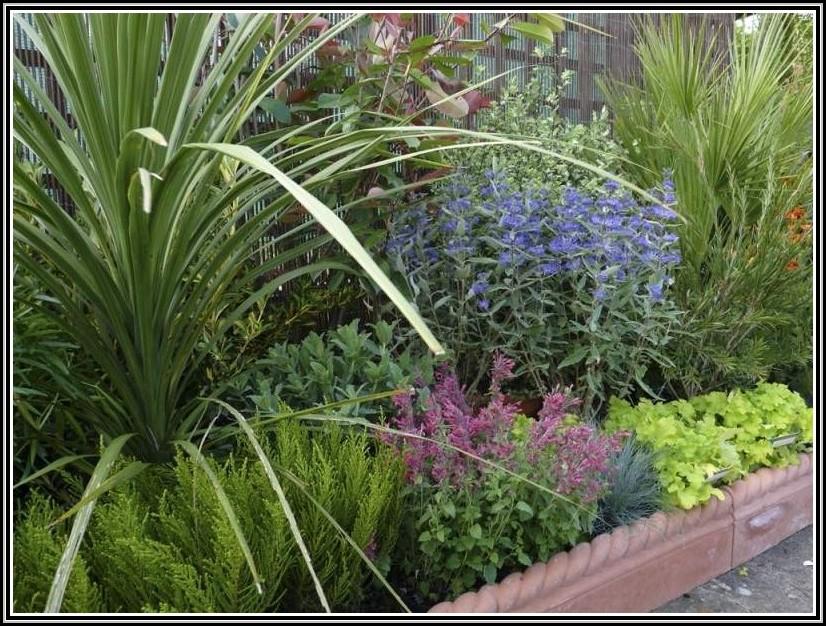 Rosmarin Im Garten Pflege
