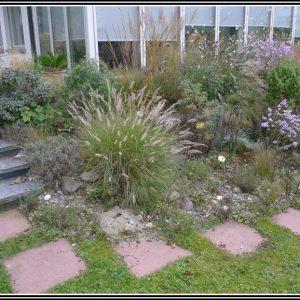 Rosmarin Im Garten Schneiden
