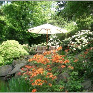 Rote Ameisen Garten