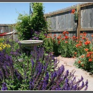 Salbei Garten Schneiden