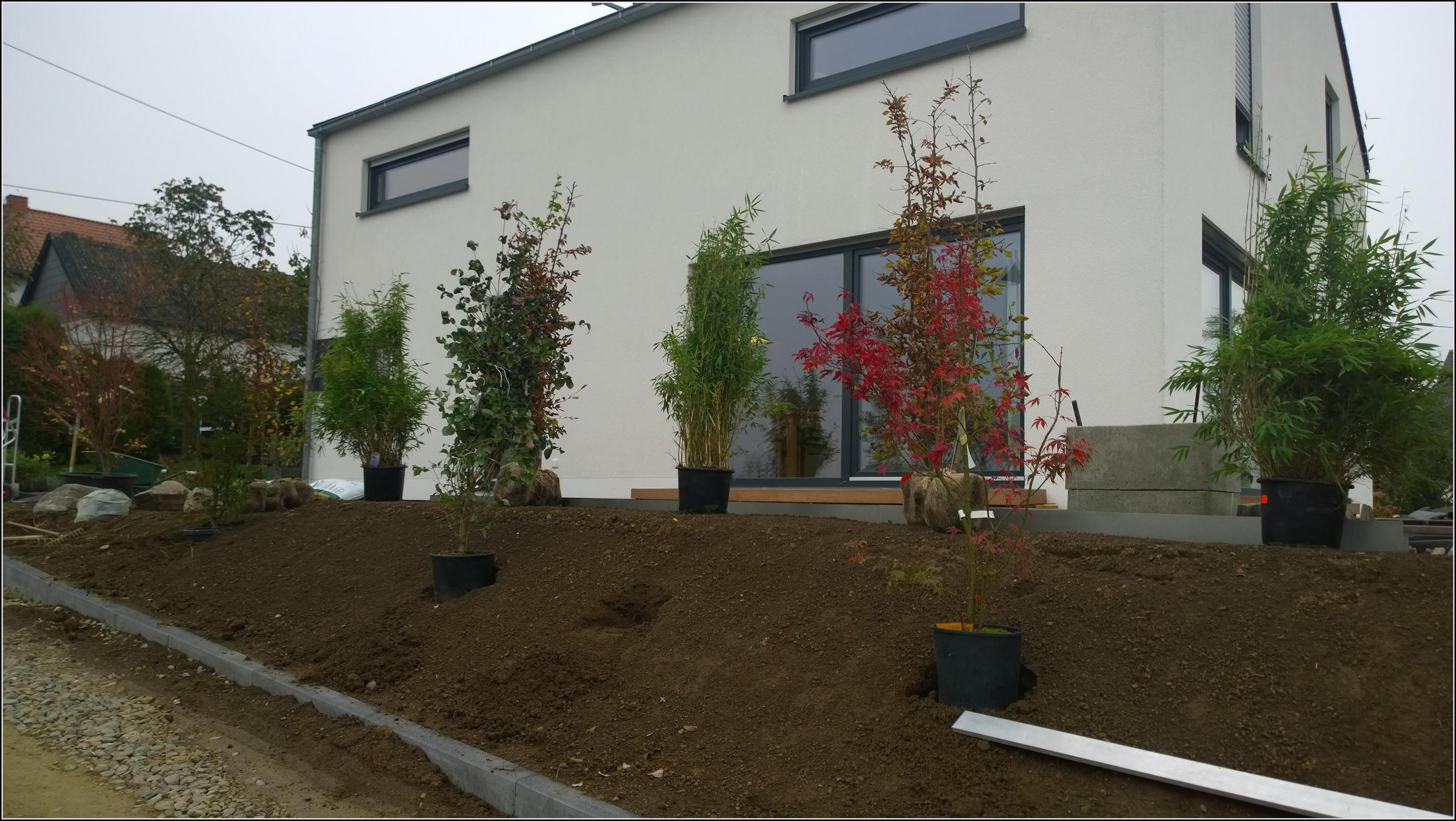 Sichtschutzbepflanzung Garten