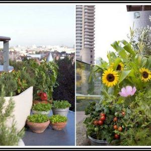 Tomaten Im Garten Anbauen