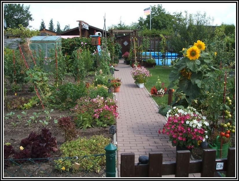 Tomaten Im Garten Anpflanzen