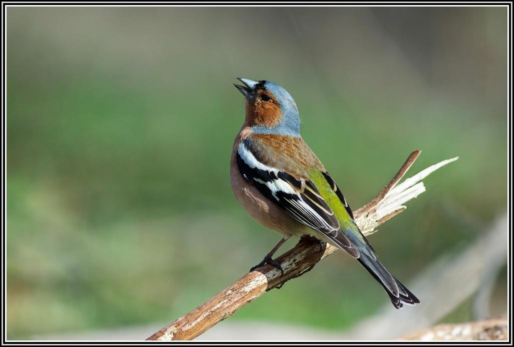 Vogel Im Garten Kann Nicht Fliegen