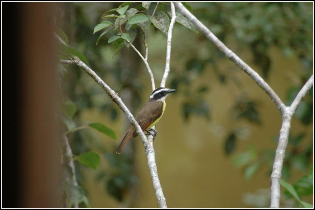 Vogelwelt Im Garten