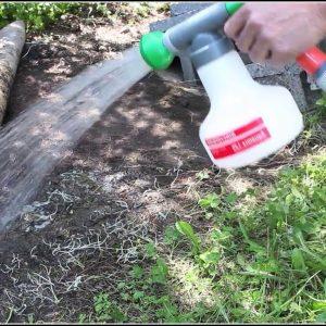 Was Tun Bei Ameisen Im Garten