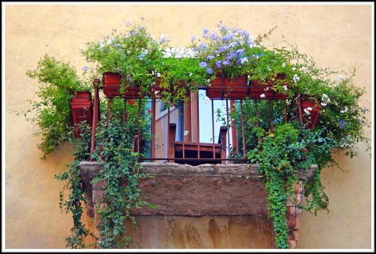 Balkon Sichtschutz Durch Pflanzen