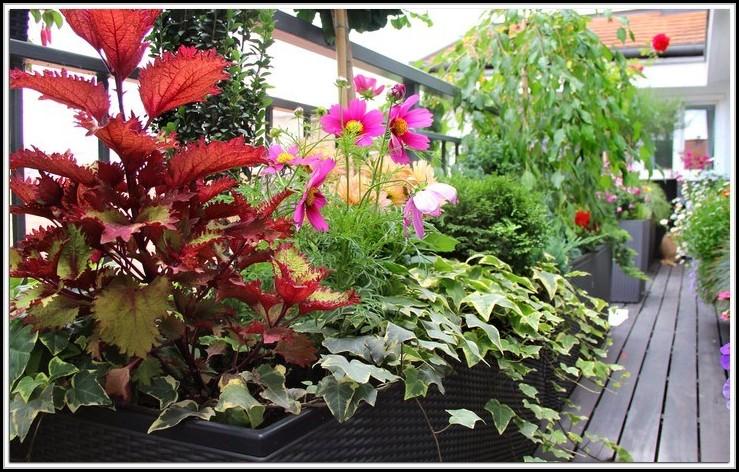 Erdbeeren Pflanzen Balkon Wann