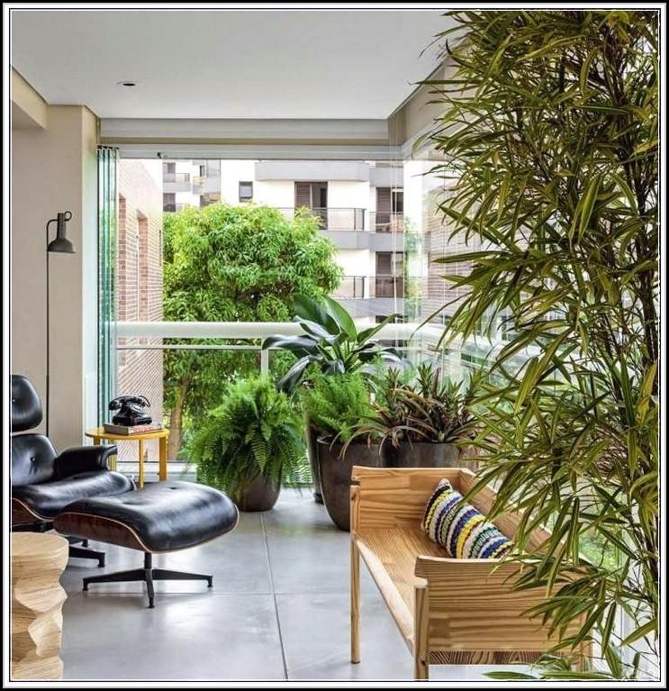Hohe Pflanzen Als Sichtschutz Balkon