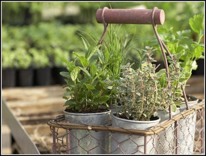 pflanzen auf dem balkon berwintern download page beste wohnideen galerie. Black Bedroom Furniture Sets. Home Design Ideas