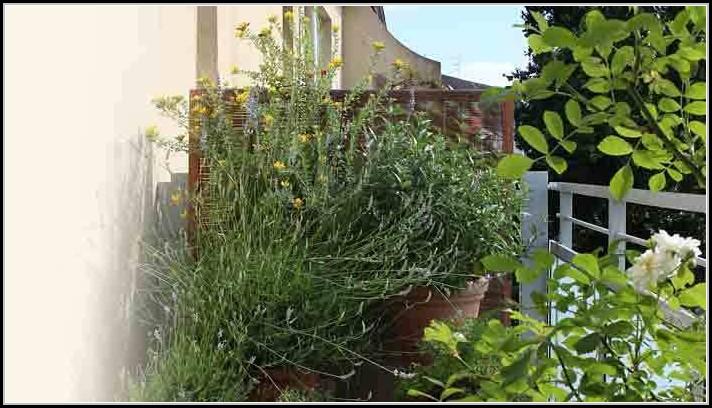 Pflanzen Auf Dem Balkon