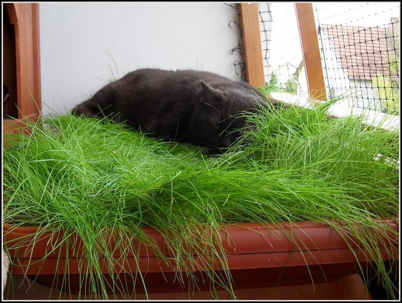 Rasen Auf Dem Balkon