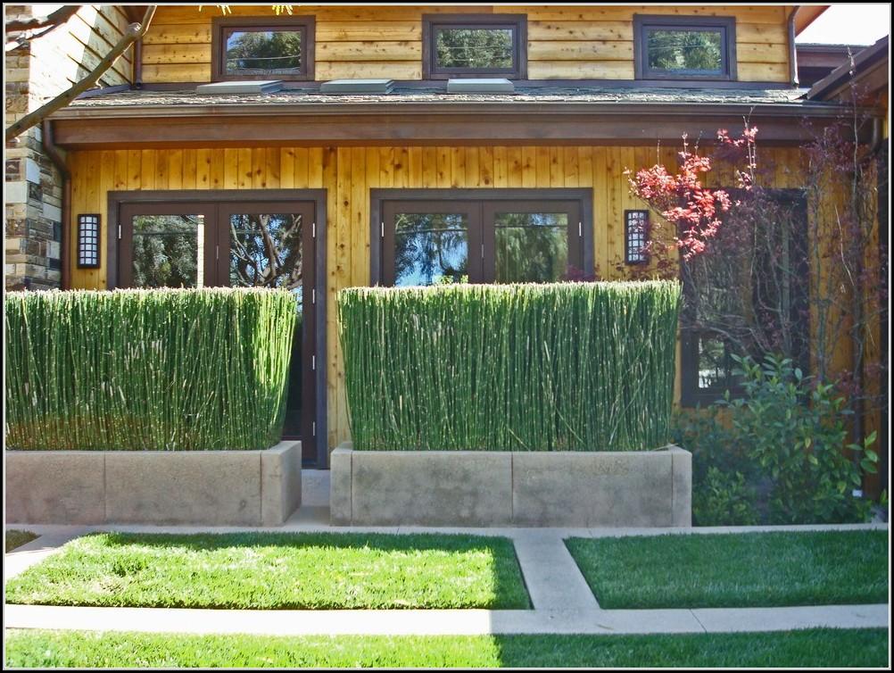 Sichtschutz Balkon Aus Pflanzen