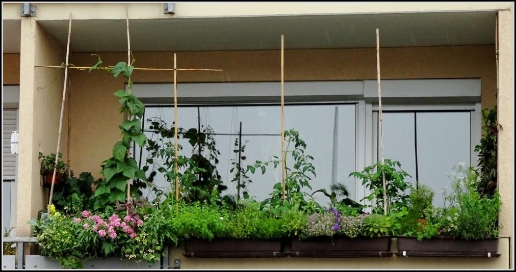 tomaten auf balkon pflanzen balkon house und dekor. Black Bedroom Furniture Sets. Home Design Ideas