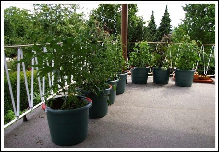 tomaten pflanzen balkon winter balkon house und dekor. Black Bedroom Furniture Sets. Home Design Ideas