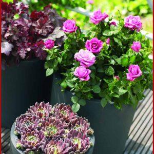 Blumen Ideen Für Terrasse