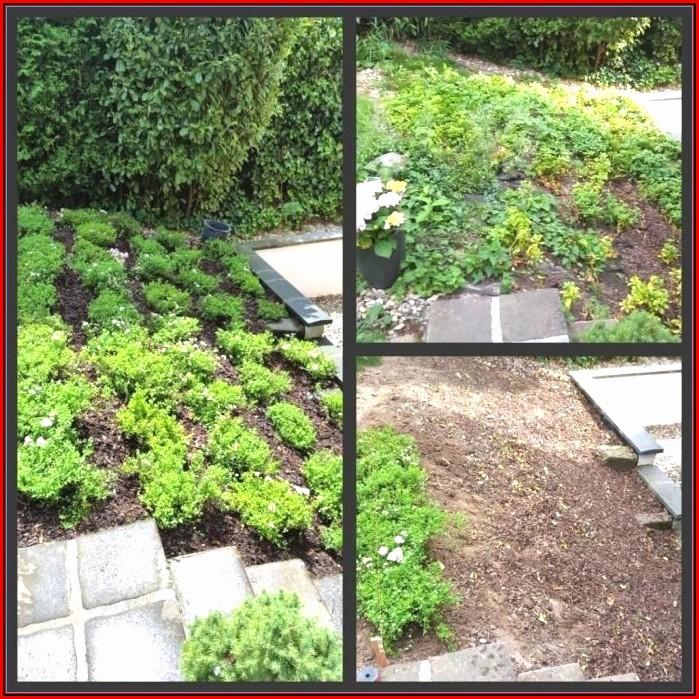 Gartengestaltung Ideen Bilder Terrasse