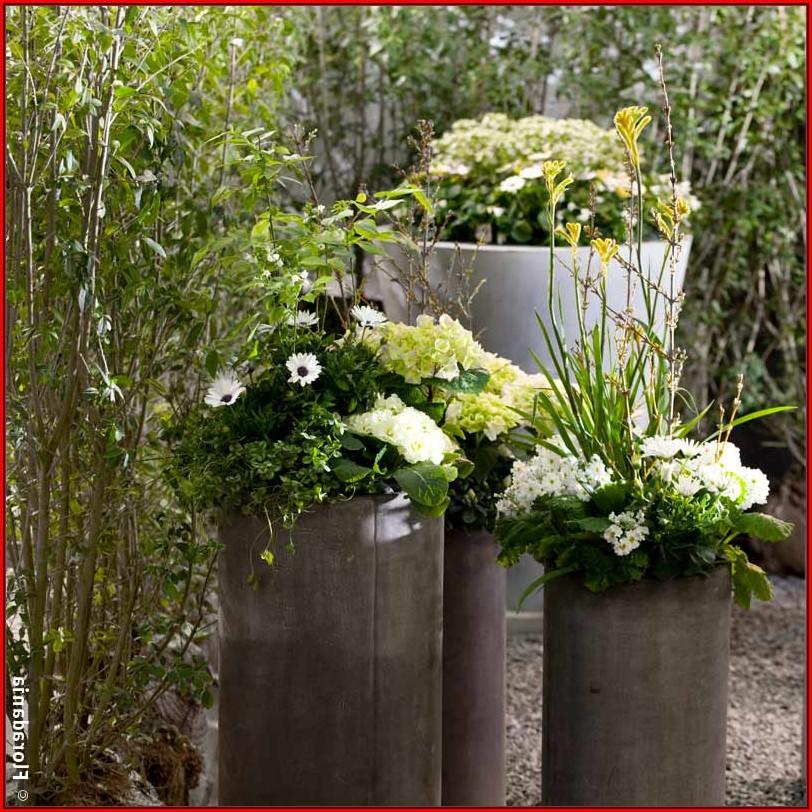 Kübelpflanzen Terrasse Ideen