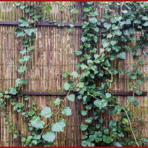 Sichtschutz Ideen Für Garten Balkon Und Terrasse