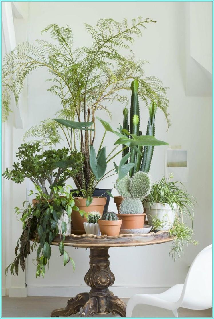 Wohnzimmer Pflanzen Ideen
