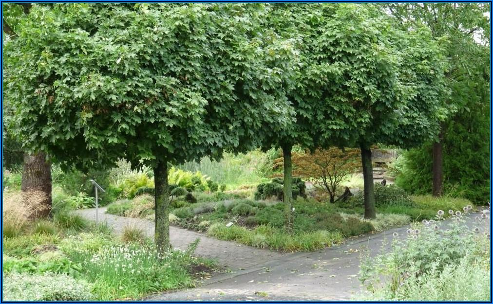 Kleine Bäume Für Terrassen