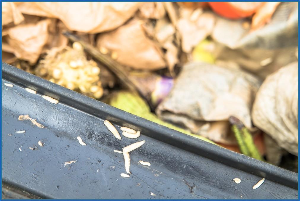 Kleine Würmer Auf Terrasse