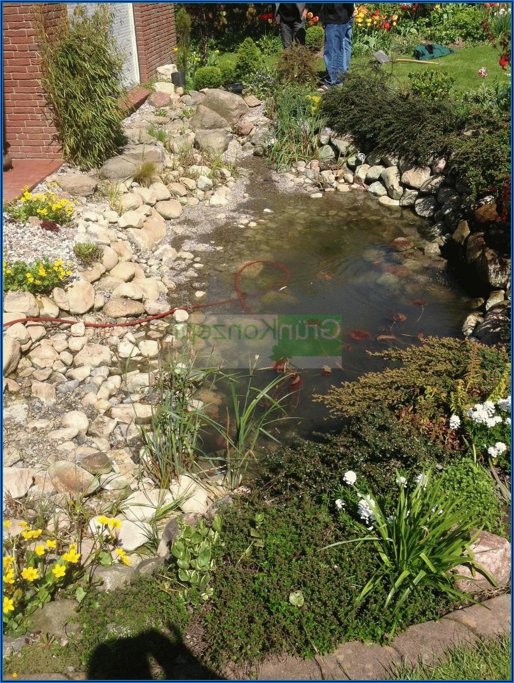 Kleiner Teich Neben Terrasse