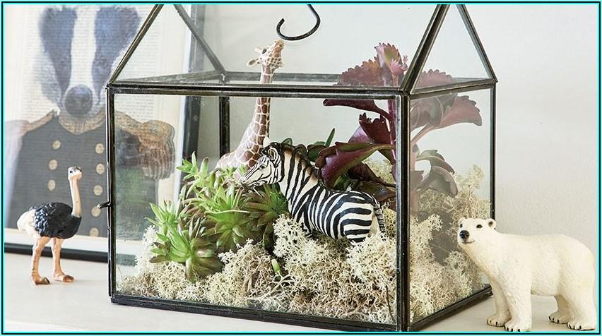 Keine Pflanzen Im Babyzimmer