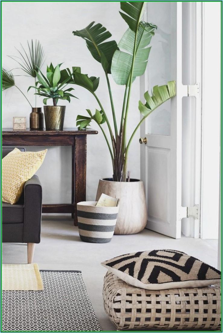 Wohnzimmer Deko Pflanzen