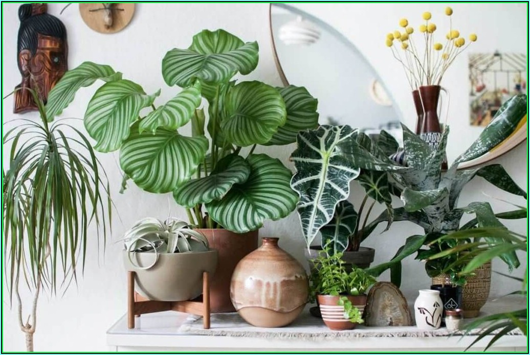 Wohnzimmer Mit Pflanzen Dekorieren