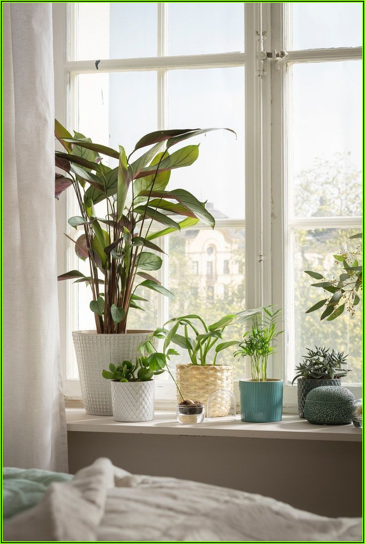 Pflanzen Deko Schlafzimmer