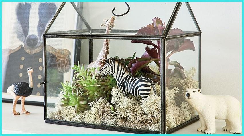 Welche Pflanzen Fürs Babyzimmer