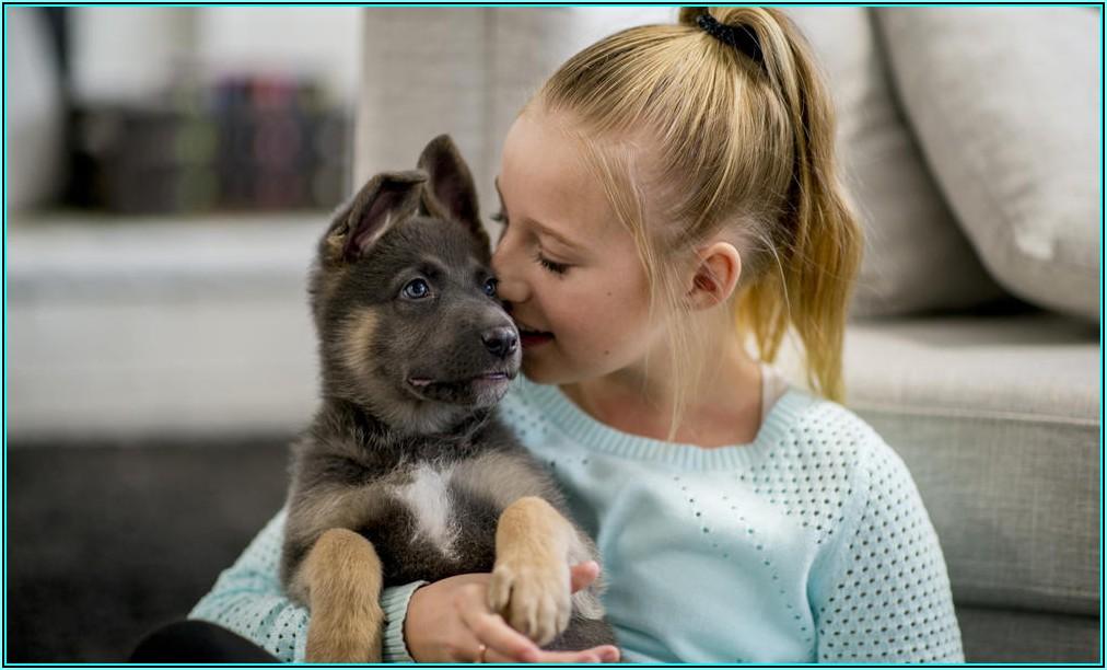 Hund Macht Ins Kinderzimmer