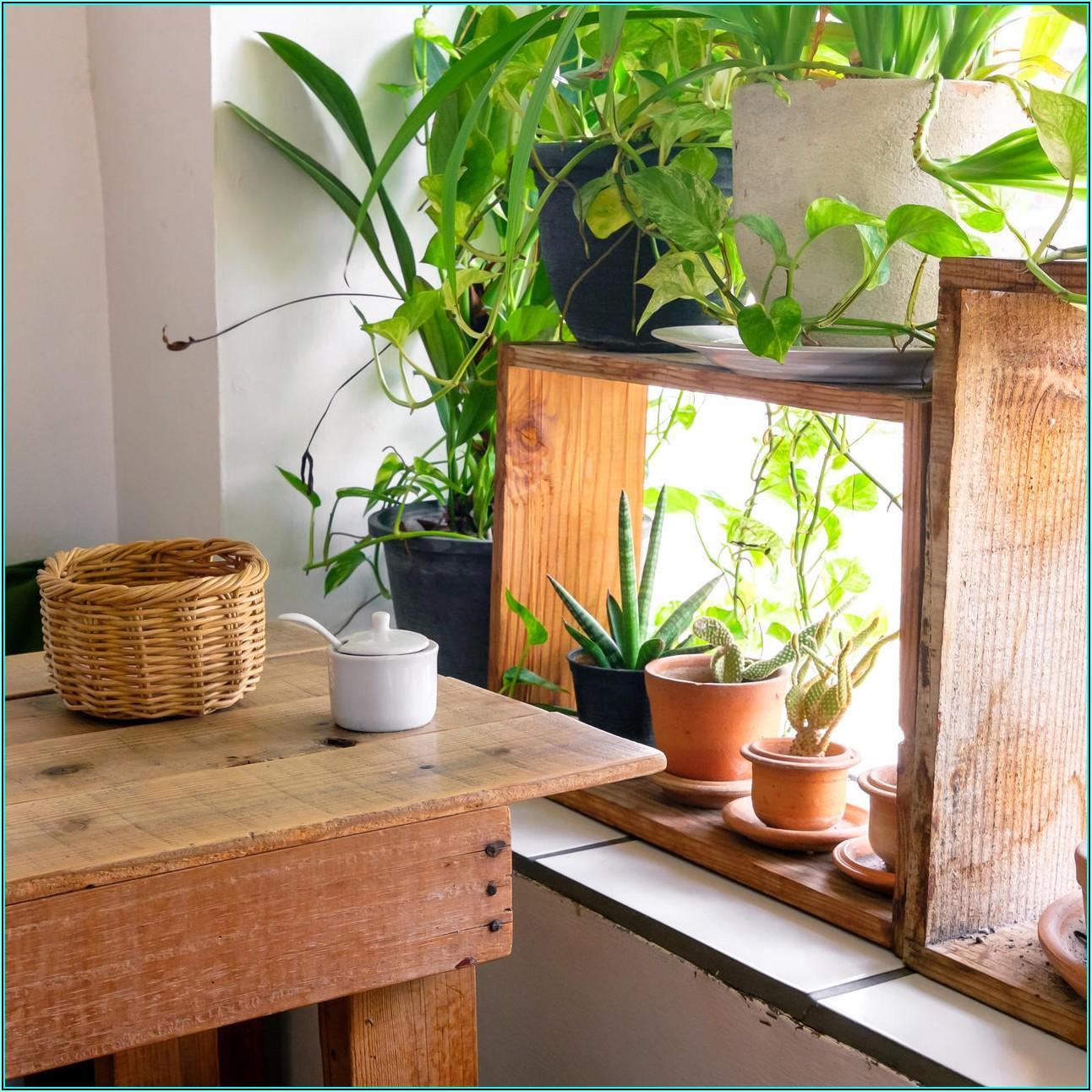 Ideale Zimmerpflanzen Für Das Kinderzimmer