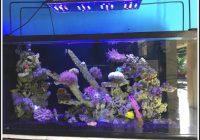 Aquarium Led Beleuchtung Selber Bauen Meerwasser